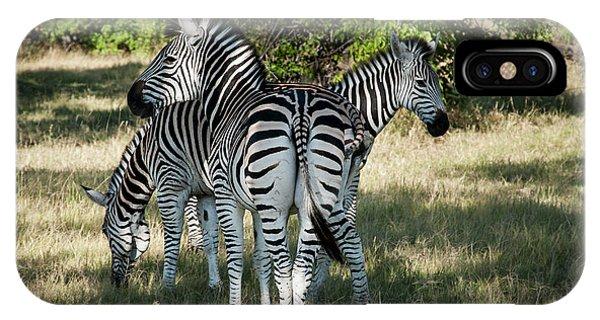 Three Zebras IPhone Case