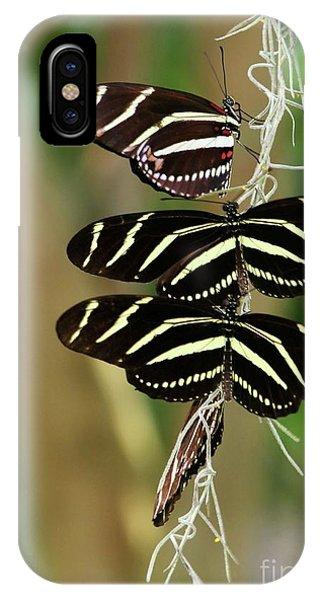 Zebra Butterflies Hanging On IPhone Case