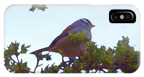 White Crowned Sparrow In Cedar IPhone Case