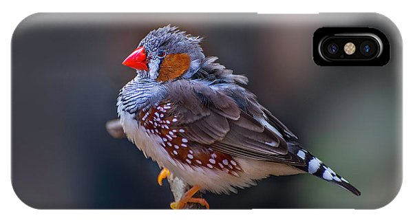 Zebra Finch IPhone Case