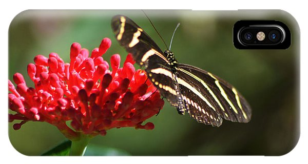 Zebra Heliconia Butterfly IPhone Case