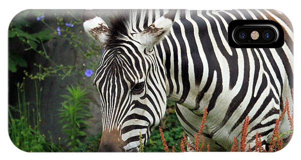 IPhone Case featuring the photograph Zebra by Jackson Pearson