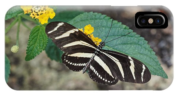 IPhone Case featuring the photograph Zebra Longwing Butterfly - 1 by Paul Gulliver