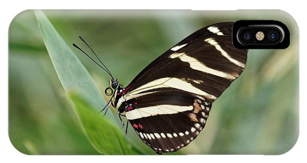 IPhone Case featuring the photograph Zebra Longwing Butterfly - 2 by Paul Gulliver