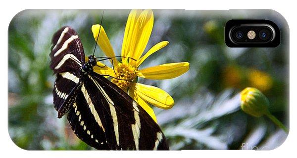 iPhone Case - Zebra Longwing Feeding by Kelly Holm