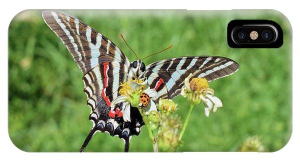 Zebra Swallowtail And Ladybug IPhone Case