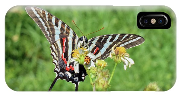 Zebra Swallowtail And Ladybug IPhone Case