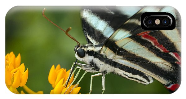 Zebra Swallowtail Drinking On The Fly IPhone Case