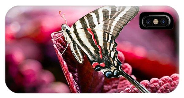 Zebra Swallowtail On Red Head Coleus IPhone Case