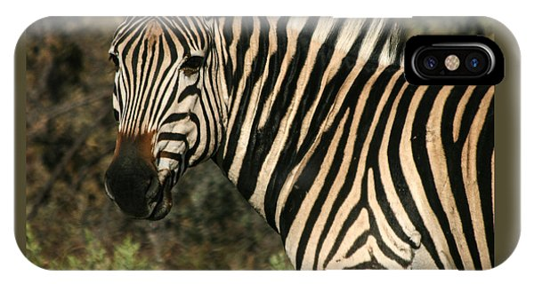 IPhone Case featuring the photograph Zebra Watching Sq by Karen Zuk Rosenblatt