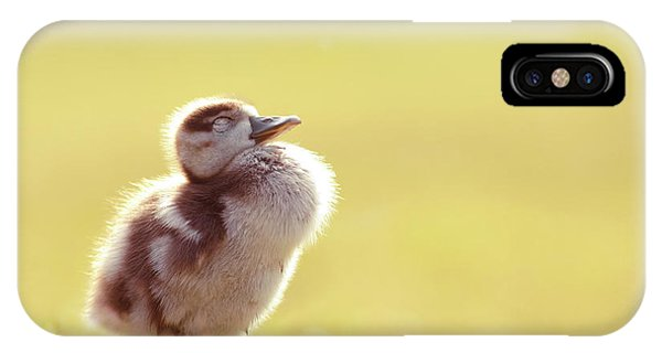 Goslings iPhone Case - Zen Bird - Gosling Enjoying The Sun Light by Roeselien Raimond