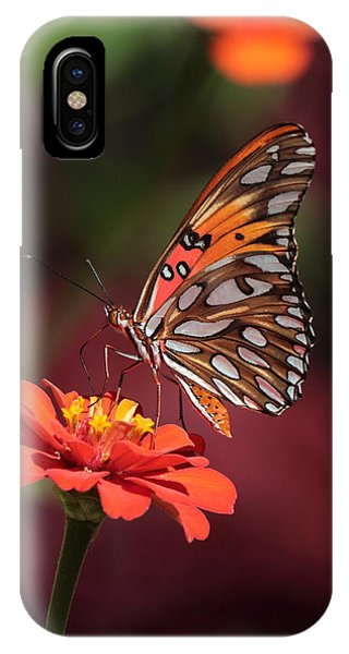 Zinnia With Butterfly 2668 IPhone Case