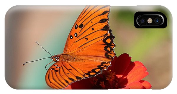 Zinnia With Butterfly 2669 IPhone Case