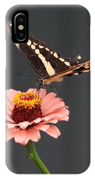 Zinnia With Butterfly 2702 IPhone Case