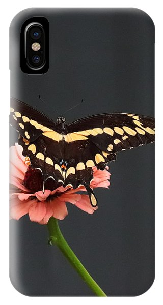 Zinnia With Butterfly 2708  IPhone Case