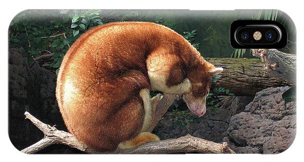 Zoo Animal IPhone Case