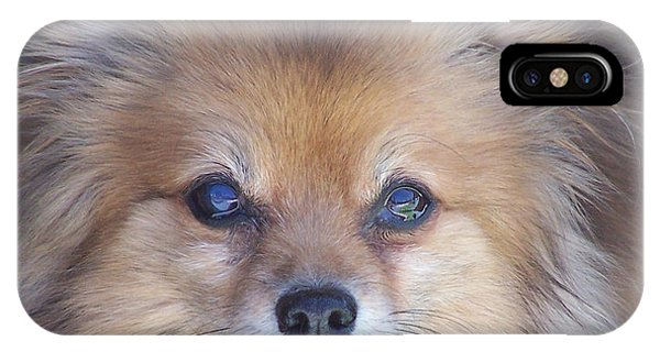 Pomeranian iPhone Case - Zoom by Brian  Commerford