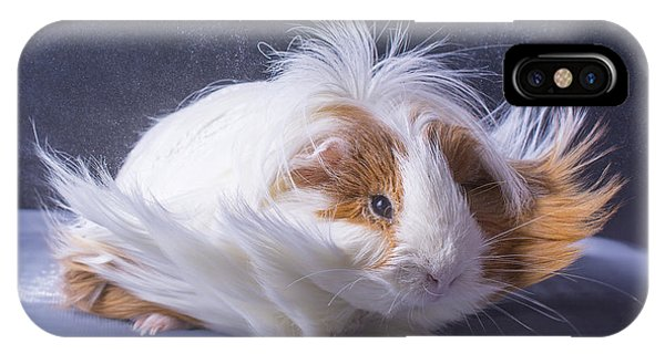 Small iPhone Case - A Guinea Pigs Hair Is Blowing In The by Ebphoto