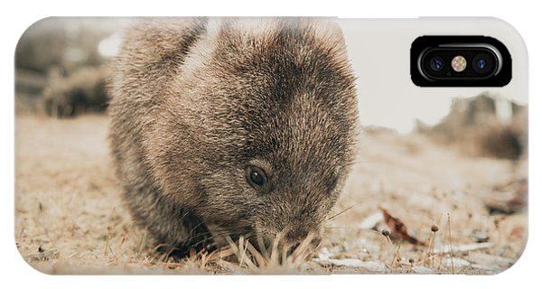 IPhone Case featuring the photograph Adorable Large Wombat During The Day Looking For Grass To Eat by Rob D Imagery