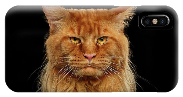 Cat iPhone X Case - Angry Ginger Maine Coon Cat Gazing On Black Background by Sergey Taran
