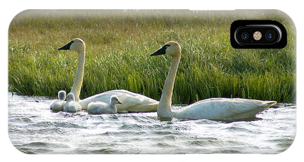 Arctic Tundra Swans And Cygnets IPhone Case