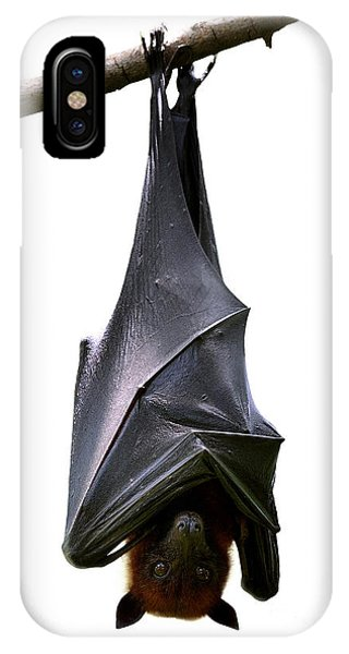 Bat iPhone X Case - Bat, Hanging Lyles Flying Fox Isolated by Boonchuay Promjiam