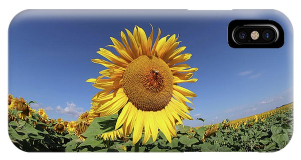 iPhone Case - Bee On Blooming Sunflower by Michal Boubin