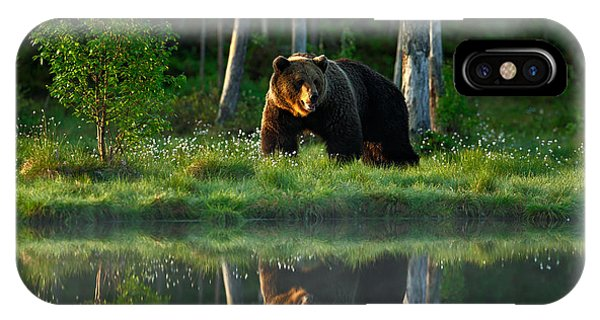Big Brown Bear Walking Around Lake In Phone Case by Ondrej Prosicky