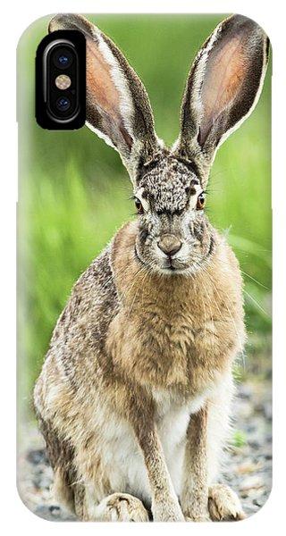 iPhone Case - Black-tailed Jackrabbit, Malheur by William Sutton