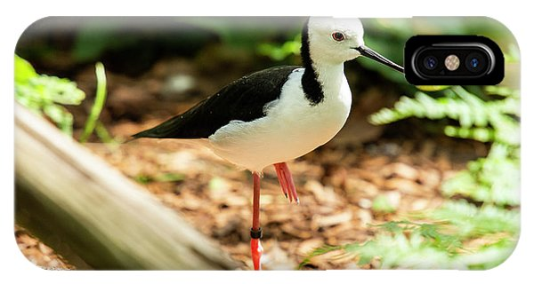 IPhone Case featuring the photograph Black-winged Stilt by Rob D Imagery