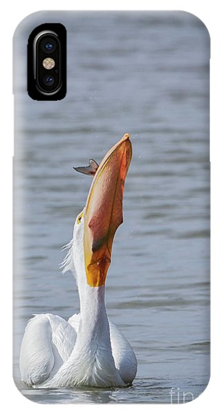 Bottoms Up IPhone Case