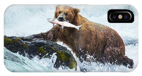 Eating iPhone Case - Brown Bear On Alaska by Galyna Andrushko