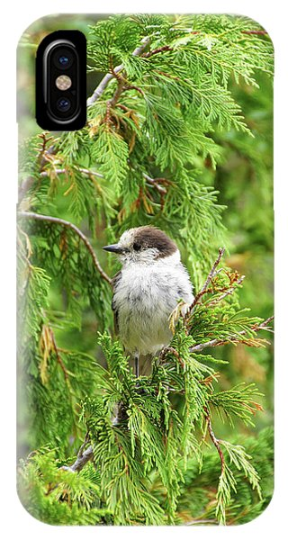Camprobber - The Gray Jay IPhone Case