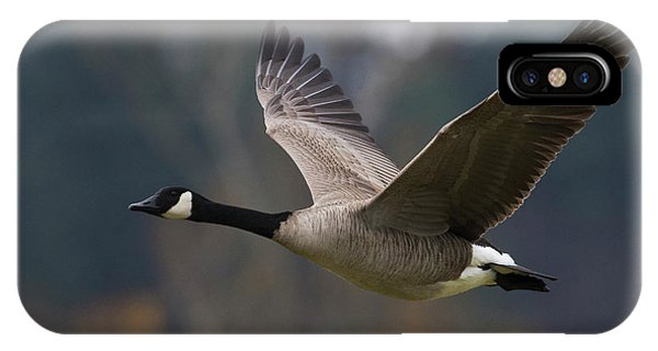 Canada Goose iPhone Case - Canada Goose Flying by Ken Archer