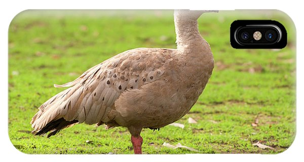 IPhone Case featuring the photograph Cape Barren Goose Out In Nature by Rob D