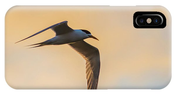 Crested Tern In The Early Morning Light IPhone Case
