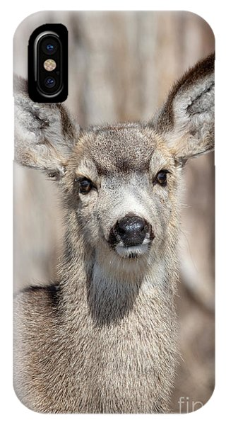 Mule Deer iPhone Case - Curious by Mike Dawson