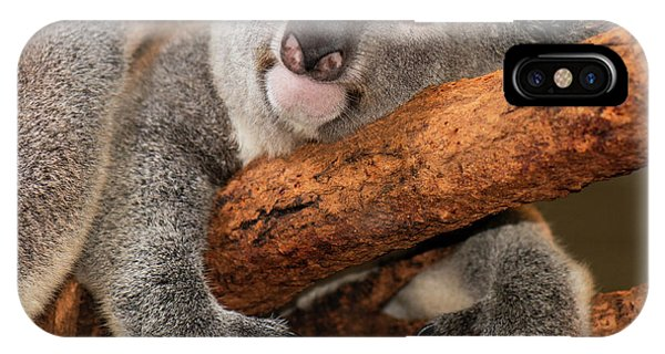 IPhone Case featuring the photograph Cute Australian Koala Resting During The Day. by Rob D Imagery