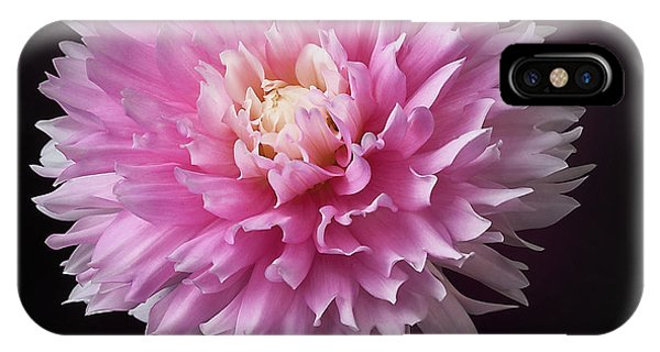 IPhone Case featuring the photograph Dahlia 'chilson's Pride' by Ann Jacobson