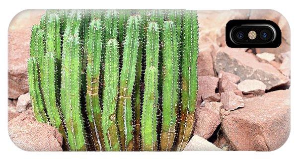 iPhone Case - Euphorbia Resinifera - Resin Spurge by Michal Boubin