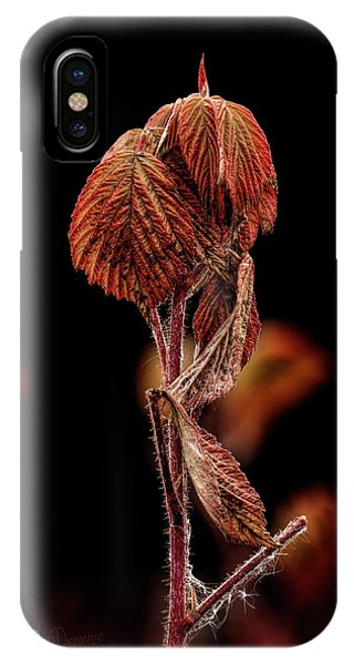 IPhone Case featuring the photograph Fall Leaves by Fred Denner