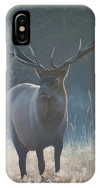 First Light - Bull Elk IPhone Case
