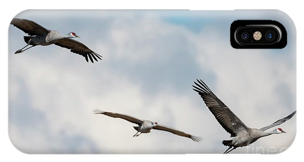 Sandhill Crane iPhone Case - Follow The Leader by Mike Dawson