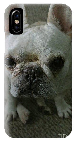 French Bull Dog iPhone Case - Frenchie's Mug Shot by Barbra Telfer