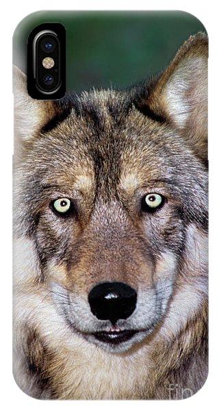 Gray Wolf Portrait Endangered Species Wildlife Rescue IPhone Case