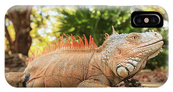 Green Iguana Farm, East End Of Roatan Phone Case by Stuart Westmorland