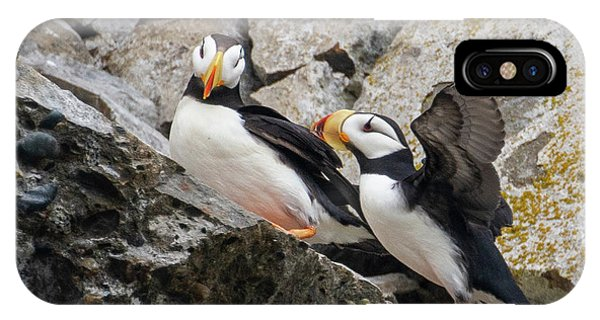Horned Puffin Pair 2 IPhone Case
