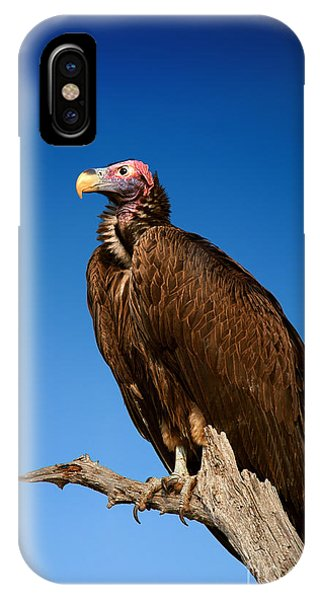 Clear iPhone Case - Lappetfaced Vulture Against Blue Sky by Johan Swanepoel