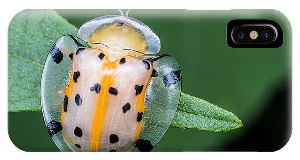 Botany iPhone Case - Macro Photography - Transparent Yellow by Keongdagreat