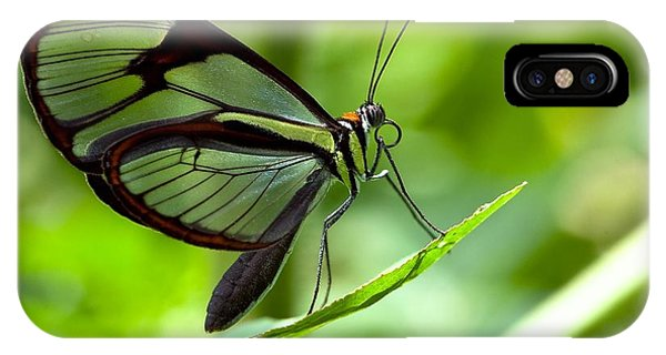 Hummingbirds iPhone Case - Macro Photos From Insects, Nature And by Dudu Linhares